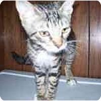Adopt A Pet :: Curious George - Grand Rapids, MI