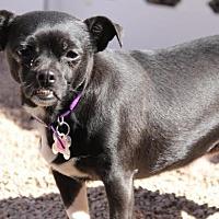 Chihuahua Mix Dog for adoption in Phoenix, Arizona - Ava