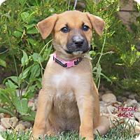 Adopt A Pet :: Adele - Thousand Oaks, CA