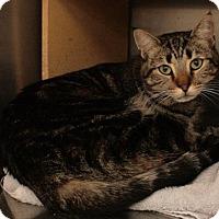 Adopt A Pet :: Han Solo - Sacramento, CA
