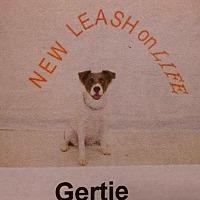 Adopt A Pet :: Gertie - Albemarle, NC