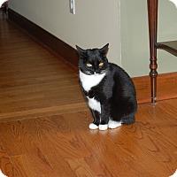 Adopt A Pet :: Callie - Monroe, NC