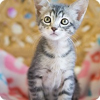 Adopt A Pet :: Elizabeth - Montclair, CA