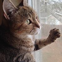Adopt A Pet :: LOVIE - Ridge, NY