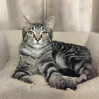 Adopt A Pet :: Sabrina (Woodbury Petsmart) - Roseville, MN