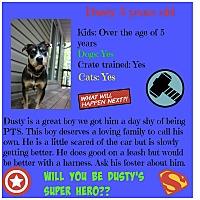 Adopt A Pet :: Dusty - Fredericksburg, VA