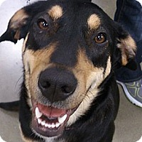 Adopt A Pet :: Callie - Georgetown, KY