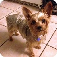 Adopt A Pet :: Gertie - Fairfax, VA