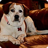 Adopt A Pet :: Bessie - Hastings, NY