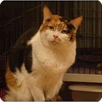 Adopt A Pet :: Sadie - Muncie, IN