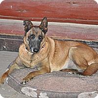 Adopt A Pet :: Diva - Hamilton, MT