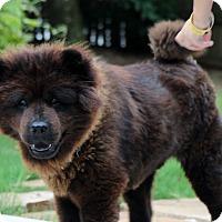 Adopt A Pet :: Charlie - Tucker, GA