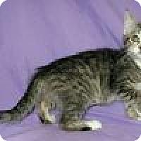 Adopt A Pet :: Shiori - Powell, OH