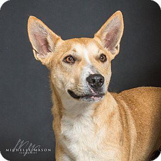 Australian Cattle Dog Mix Dog for adoption in Naperville, Illinois - Mister