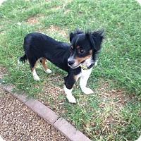 Adopt A Pet :: Topanga - Las Vegas, NV