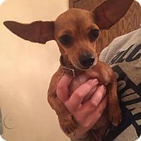 Adopt A Pet :: Tiki - Brooklyn Center, MN
