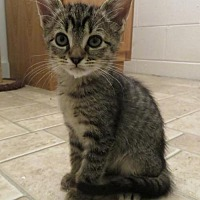 Adopt A Pet :: Henry-Rutherford - Asheville, NC