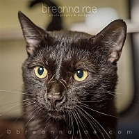 Adopt A Pet :: Koopman - Sheboygan, WI