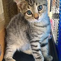 Adopt A Pet :: Spitt - Homestead, FL