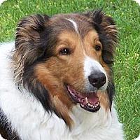 Adopt A Pet :: Gertie - Minneapolis, MN