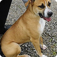 Adopt A Pet :: Mimi - Washington Court House, OH
