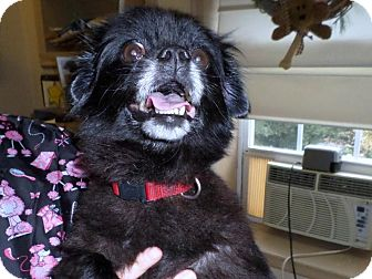 Pekingese Mix Dog for adoption in Broadway, New Jersey - Muchia