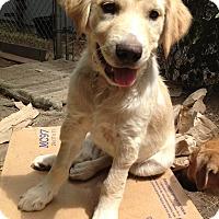Adopt A Pet :: Chevette - Adoption Pending - Gig Harbor, WA