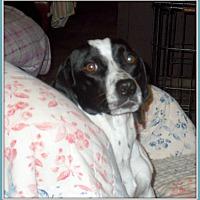 Adopt A Pet :: Scarlet - Girard, GA