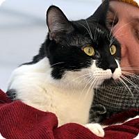 Adopt A Pet :: Delta Bourbon - Brooklyn, NY