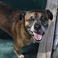 Adopt A Pet :: Bullet - Homewood, AL