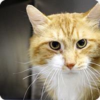 Adopt A Pet :: Puddin' - Muskegon, MI