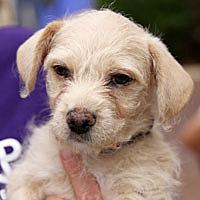 Adopt A Pet :: Paisley - Pacific Grove, CA