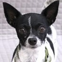 Adopt A Pet :: Carnegie - Encinitas, CA