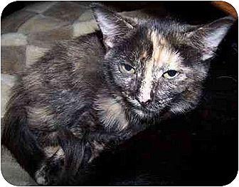 Domestic Shorthair/Domestic Shorthair Mix Cat for adoption in Sheboygan, Wisconsin - Ella