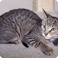 Adopt A Pet :: K-Willow5-Walter - Colorado Springs, CO