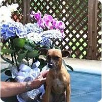 Adopt A Pet :: Chelsea - Kingwood, TX