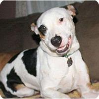 Adopt A Pet :: J.D. - Nashville, TN