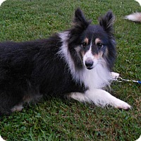 Adopt A Pet :: Bandit (Adopted) - Pittsburgh, PA