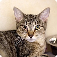 Adopt A Pet :: Toña Ville - Chicago, IL
