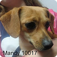 Adopt A Pet :: Mandy - Greencastle, NC