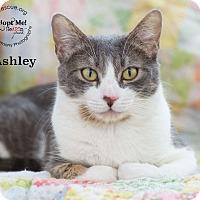 Adopt A Pet :: Ashley - Phoenix, AZ