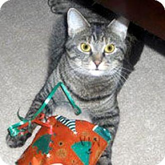 Domestic Mediumhair Cat for adoption in Verdun, Quebec - Mia
