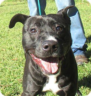 Terrier (Unknown Type, Medium) Mix Dog for adoption in Reeds Spring, Missouri - Tucker