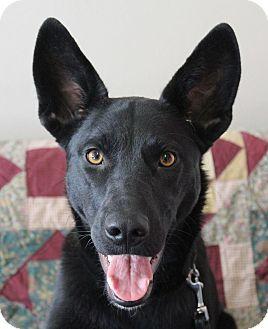 Labrador Retriever/German Shepherd Dog Mix Dog for adoption in Hurricane, Utah - ABBY