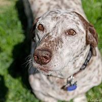 Adopt A Pet :: Chip - Salt Lake City, UT