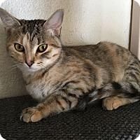 Adopt A Pet :: Heart - Prescott, AZ