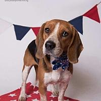 Adopt A Pet :: Lea - Kenner, LA