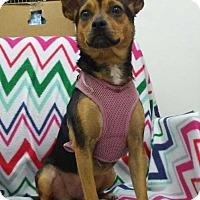Adopt A Pet :: Mattie - Wyanet, IL