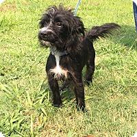 Adopt A Pet :: Mojo - Allentown, PA