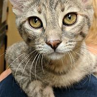 Adopt A Pet :: GAMORA - Clayton, NJ